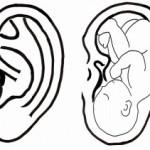 耳1-300x211